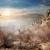 鳥 · 谷 · 幽霊 · 霧 · ツリー · 太陽 - ストックフォト © givaga