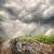 роста · зеленый · дорожный · знак · облака · небе · драматический - Сток-фото © givaga