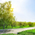 asphalt road in the park stock photo © givaga