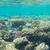 hal · trópusi · Vörös-tenger · tájkép · tenger · háttér - stock fotó © givaga