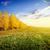 береза · лес · Солнечный · осень · утра · пейзаж - Сток-фото © givaga