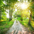 road in a birch forest stock photo © givaga