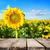 bois · bord · herbe · ciel · printemps · fond - photo stock © givaga