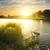 парка · пруд · пирс · металл · древесины · небольшой - Сток-фото © givaga