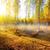 береза · дерево · листьев · осень · желтый - Сток-фото © givaga