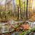 spadek · rzeki · krajobraz · kolorowy · jesienią · drzew - zdjęcia stock © givaga