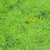 лягушка · болото · сидят · животного - Сток-фото © glasaigh