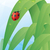 Ladybug · лист · счастливым · саду · лет · цвета - Сток-фото © gleighly