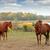kettő · lovak · testtartás · közelkép · kilátás · fű - stock fotó © goce