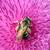 Biene · Blume · Natur · Sommer · grünen - stock foto © goce