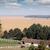 horses on ranch farmland landscape stock photo © goce