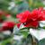 red roses flower garden springtime stock photo © goce