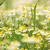 közelkép · méh · dohányos · láda · farm · kéz - stock fotó © goce