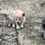 iki · kedi · yavruları · oturma · çim · yakın · birlikte - stok fotoğraf © goce