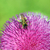 abeille · fleur · beauté · vert · usine - photo stock © goce