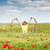 красочный · Полевые · цветы · луговой · красивой · весны · трава - Сток-фото © goce