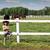 cavalo · menina · chapéu · de · cowboy · jovem · ao · ar · livre · sensual - foto stock © goce