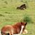 kettő · ló · testtartás · fa · természet · zöld - stock fotó © goce