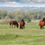 herd of horses on field stock photo © goce