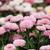 デイジーチェーン · 春 · シーズン · 自然 · 庭園 - ストックフォト © goce