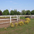 ranch with white corral for horses stock photo © goce