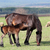 horse foal neigh on pasture stock photo © goce