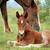 tay · kahverengi · deri · at · bebek - stok fotoğraf © goce
