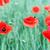 arı · çiçek · bahar · sezon · doğa · yaz - stok fotoğraf © goce