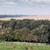 farmland landscape horses in corral stock photo © goce