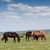 horses on pasture summer season stock photo © goce