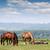 herd of horses on pasture spring season stock photo © goce