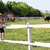 little girl standing on the corral and watching horses stock photo © goce