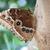borboleta · flor · jardim · preto · cor · animal - foto stock © goce