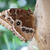 vlinder · bloem · tuin · zwarte · kleur · dier - stockfoto © goce