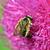Biene · Blume · Blumen · Hintergrund · Sommer - stock foto © goce
