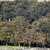 herd of horses on pasture farmland landscape stock photo © goce