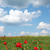 poppy flowers and blue sky meadow landscape stock photo © goce