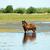 foal standing in water summer season stock photo © goce