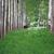оленей · хорошо · природы · череп · голову - Сток-фото © goce