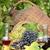 grape and wine autumn scene stock photo © goce