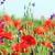 weide · voorjaar · seizoen · hemel · landschap - stockfoto © goce