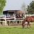 horses in corral on ranch stock photo © goce