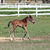 cute foal running farm scene stock photo © goce