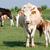 melk · veld · voedsel · baby · gras · natuur - stockfoto © goce