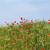 blauwe · hemel · mooie · paars · bloemen · weide · voorjaar - stockfoto © goce