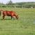 barna · ló · testtartás · nyár · évszak · égbolt - stock fotó © goce
