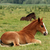 foals lying on pasture stock photo © goce