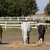 horses and foals in corral farm scene stock photo © goce