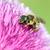 Biene · Blume · Frühling · Jahreszeit · Blumen - stock foto © goce