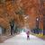 kislány · sétál · park · esernyő · tavasz · természet - stock fotó © goce